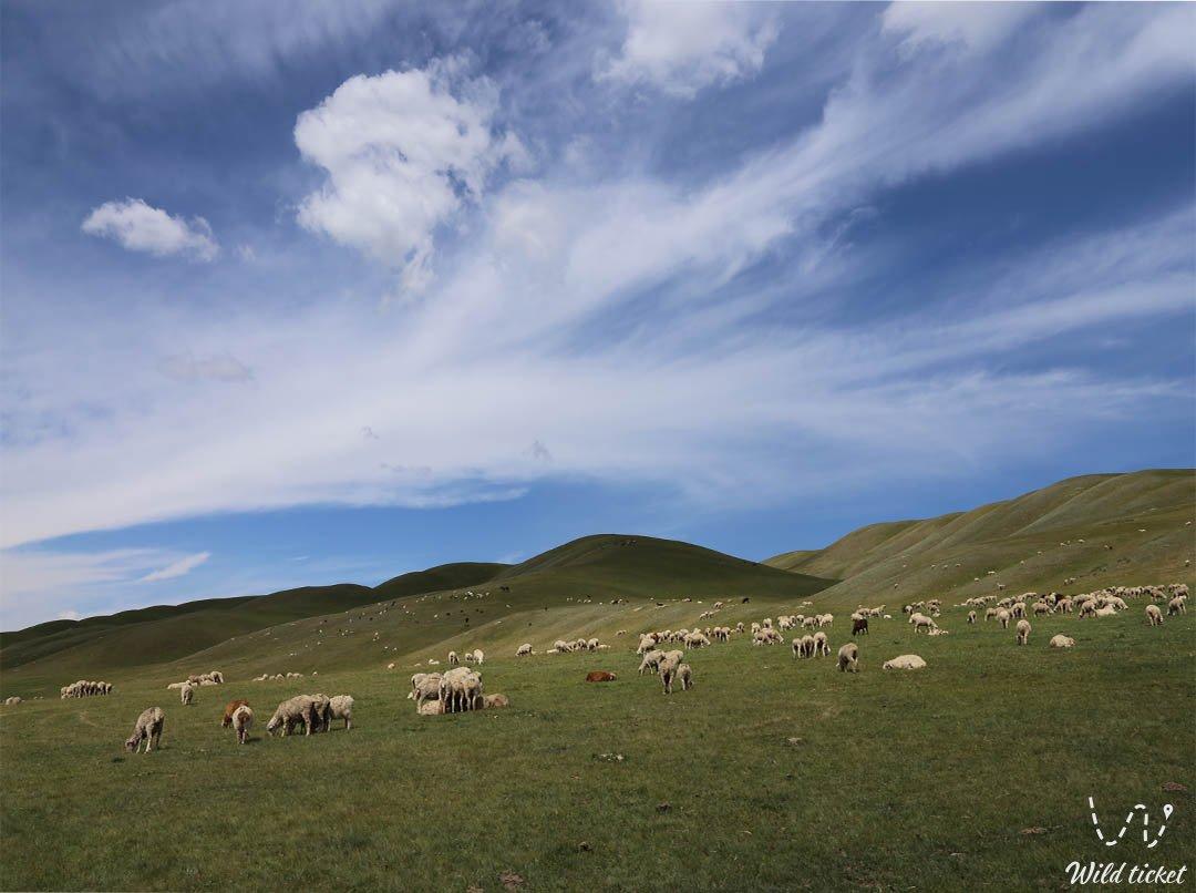 Assy mountain plateau in Turgen gorge, Almaty region, Kazakhstan.