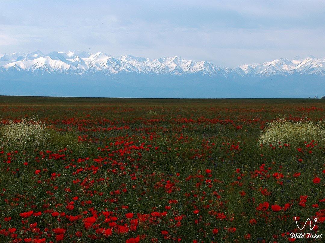 Киргизский Алатау в Жамбылской области, Казахстан.