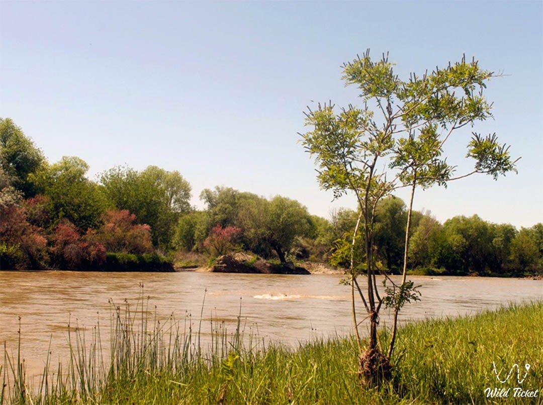 Арысь река в Жамбылской области, Казахстан.