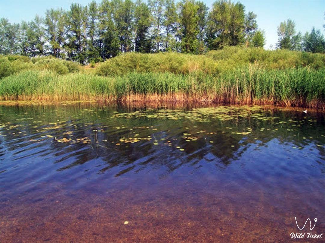 Аят река в Костанайской области, Казахстан.