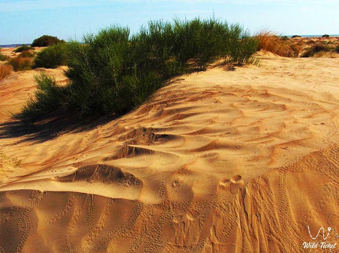 Каракум пустыня в Алматинской области, Казахстан.