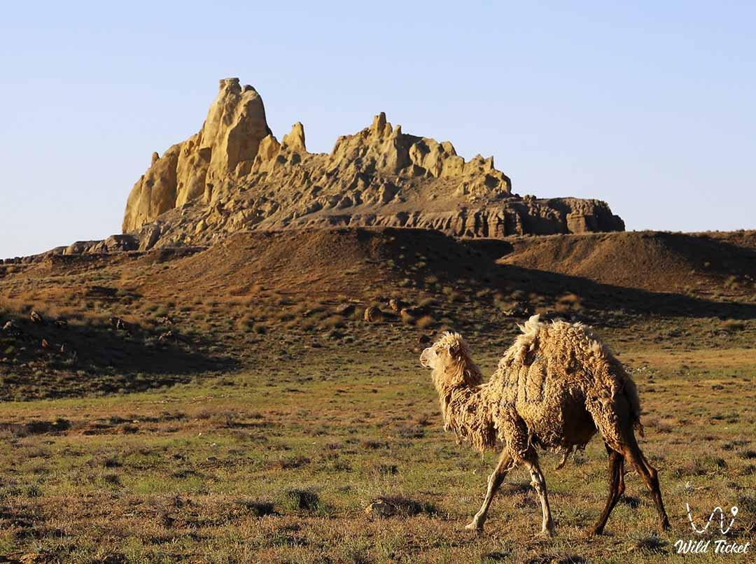 Shomanay mount and valley in Mangystau region, Kazakhstan.