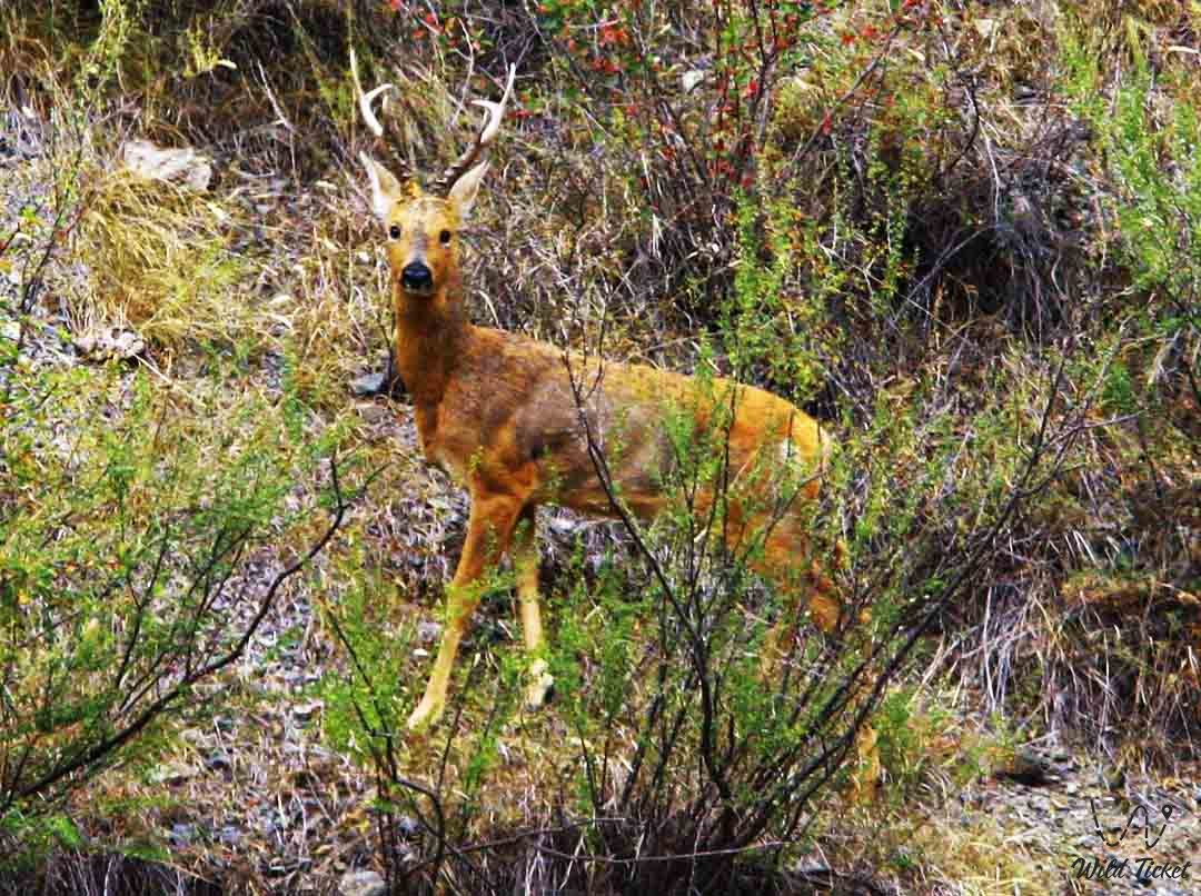 Флора и фауна Казахстана, наблюдение за птицами и растениями в Алматинской области.