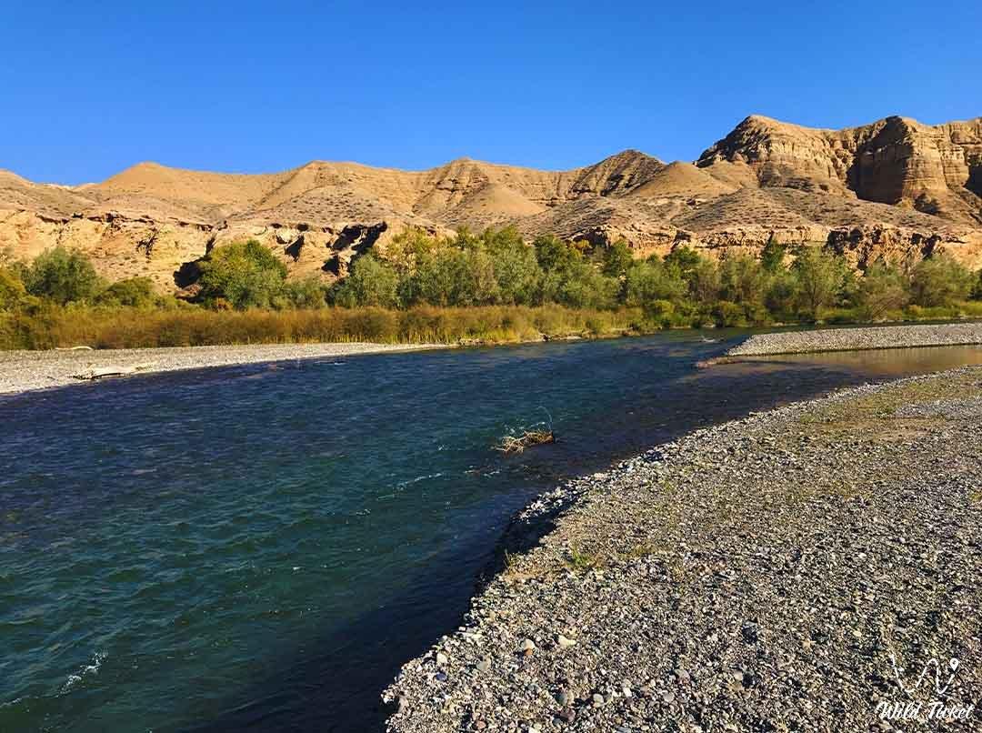 Куртогай урочище, каньон на реке Чарын, Алматинская область, Казахстан.