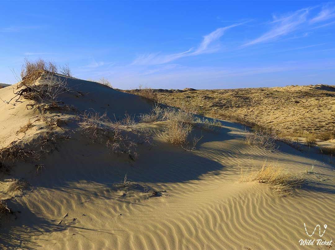Kyzylkum desert in Kyzylorda region, Kazakhstan.