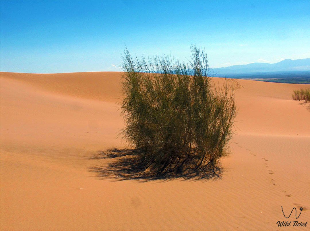 Бетпак-Дала пустыня, на территории Казахстана.