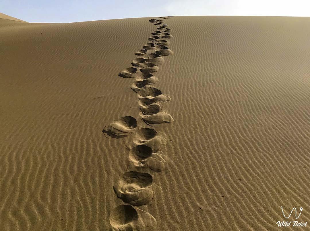 Пески Сам, Мангистауская область, Казахстан.