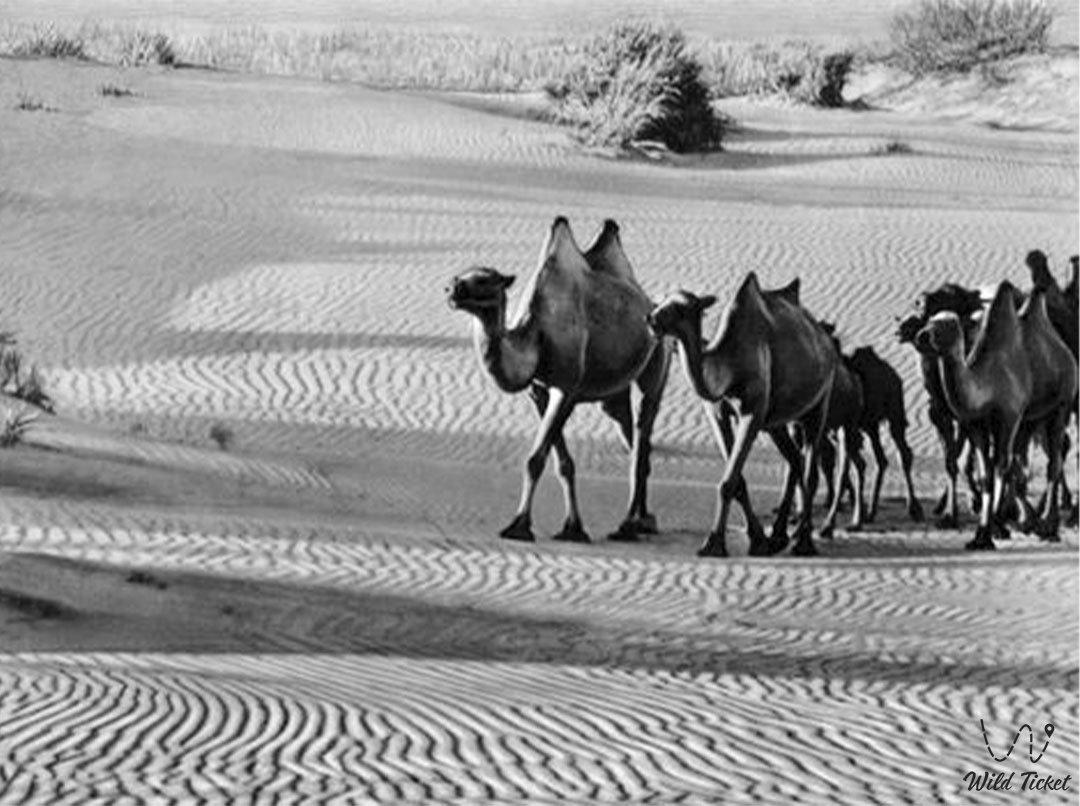 Ryn sands, Naryn sands, Western Kazakhstan.
