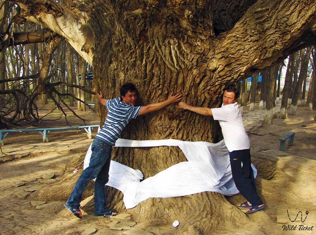 Аулие Агаш священное дерево, Алматинская область, Казахстан.