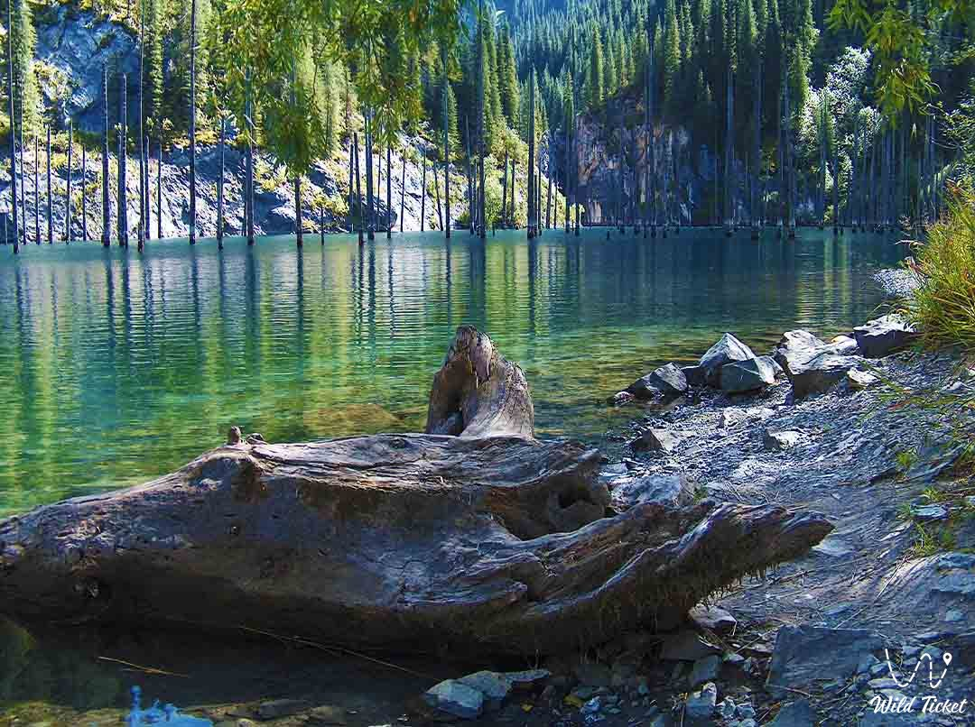 Lake Kaindy in the Kolsay nature reserves, Kazakhstan.