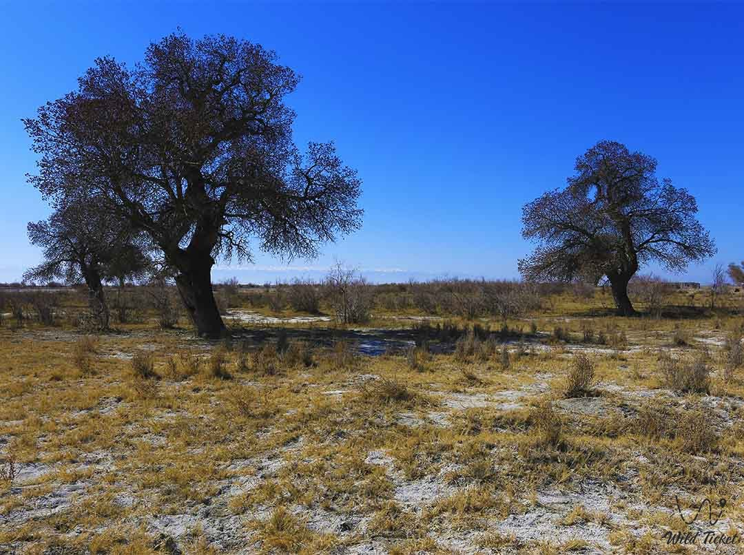 Attractions of the Ash Grove on Charyn