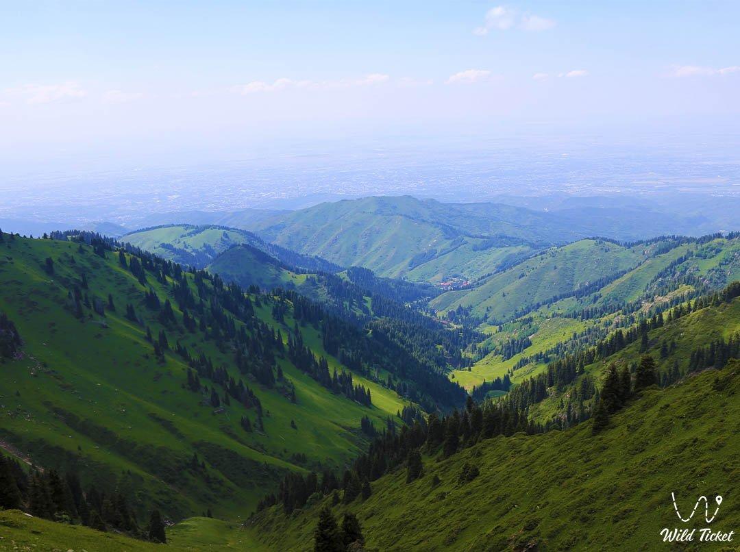 Alpingrad mountain meadow glade.